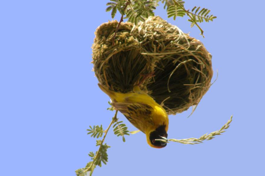 Petits nids d'amour