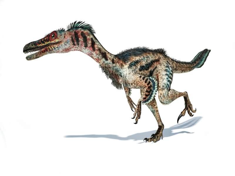 1996 Les dinosaures avaient des plumes