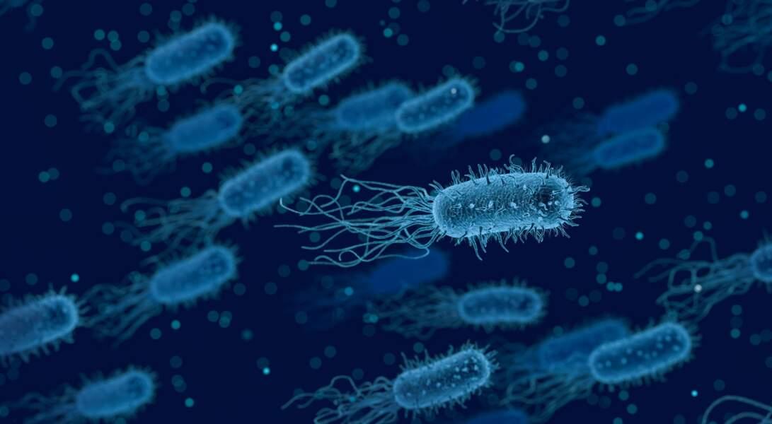 2016 Des bactéries dans le microbiome