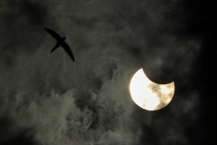 Un oiseau vole à côté de l'éclipse annulaire partielle à Saint-Pétersbourg en Russie