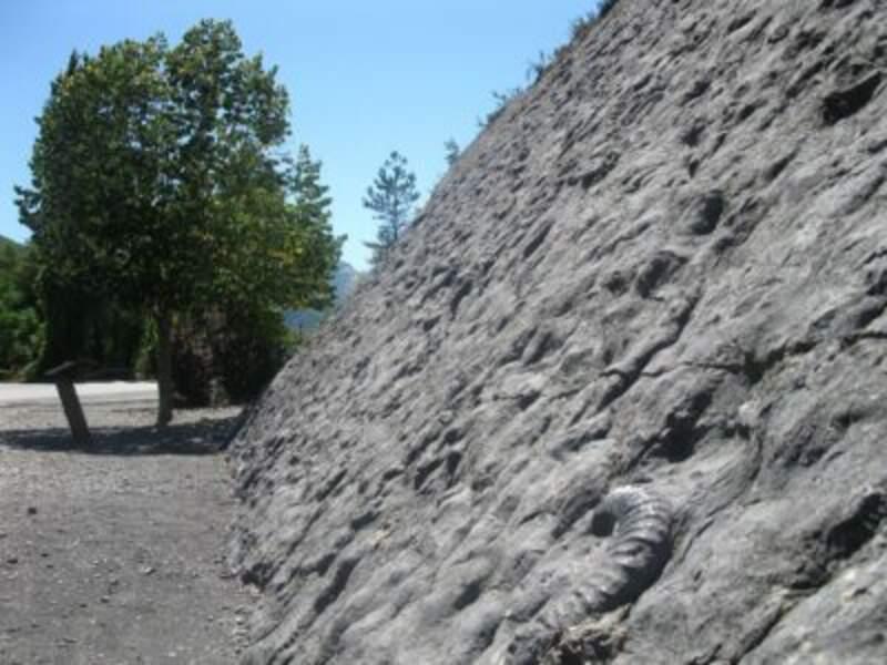 La Dalle aux ammonites à Digne-les-Bains