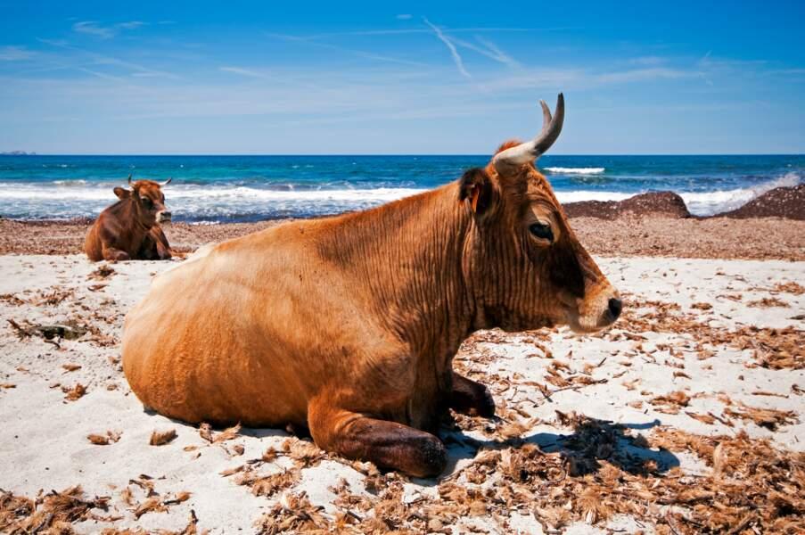 La corse sauvage : sur la plage abandonnée