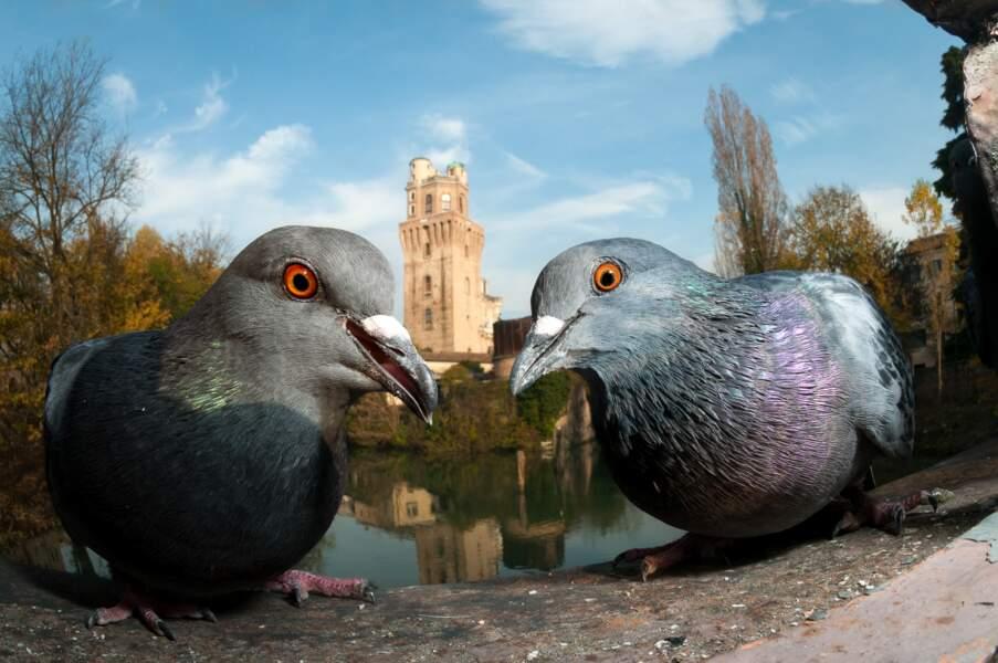 """Médaille de bronze, catégorie """"Oiseaux urbains"""""""