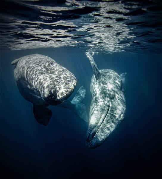 """Troisième prix, catégorie """"Young Ocean Photographer of the Year"""""""