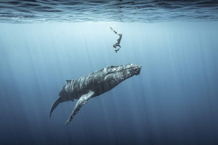 "Troisième prix, catégorie ""Ocean Adventure Photographer of the Year """