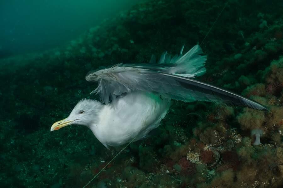 """Deuxième prix, catégorie """"Ocean Conservation Photographer of the Year"""""""