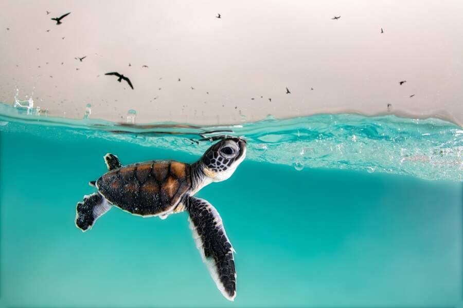 """Premier prix, catégorie """"Young Ocean Photographer of the Year"""""""