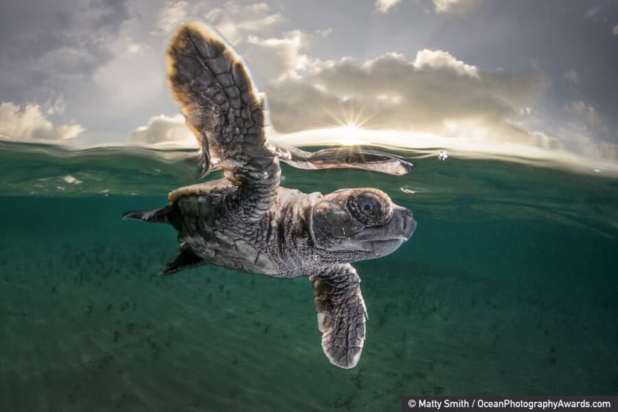 """Troisième prix, catégorie """"Ocean Photographer of the Year"""""""