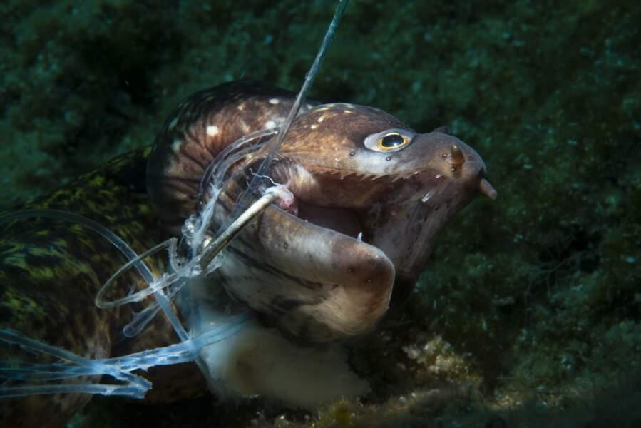 "Premier prix, catégorie ""Ocean Conservation Photographer of the Year"""