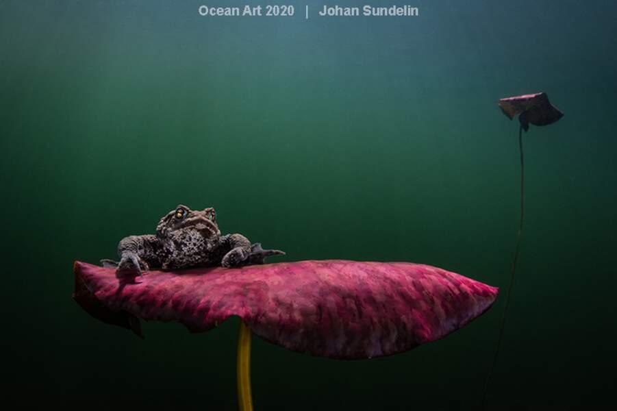 """""""Waiting for the Kiss"""", Johan Sundelin : deuxième prix catégorie """"Coldwater"""""""