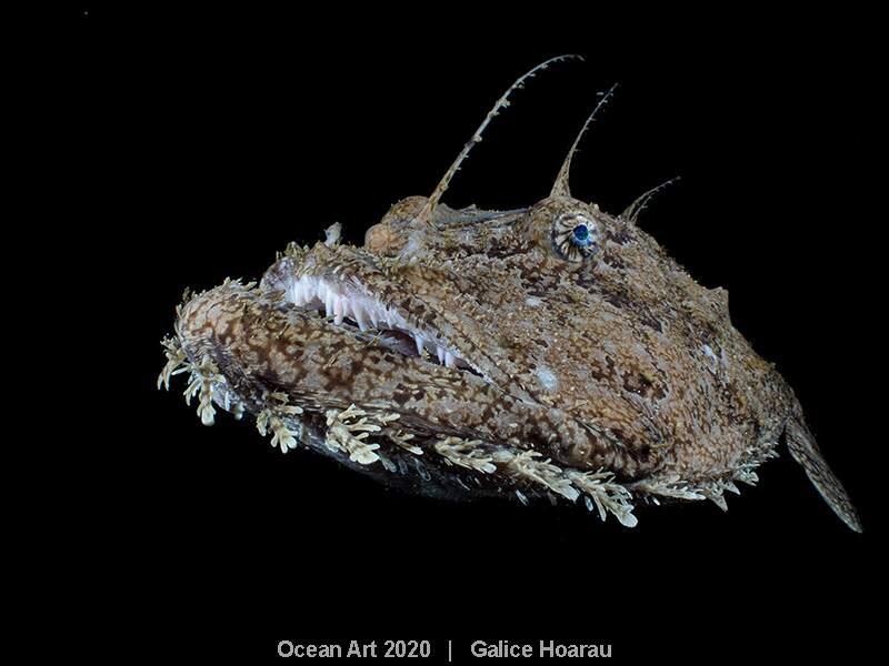 """""""Anglerfish"""", Galice Hoarau : premier prix catégorie """"Portrait"""""""