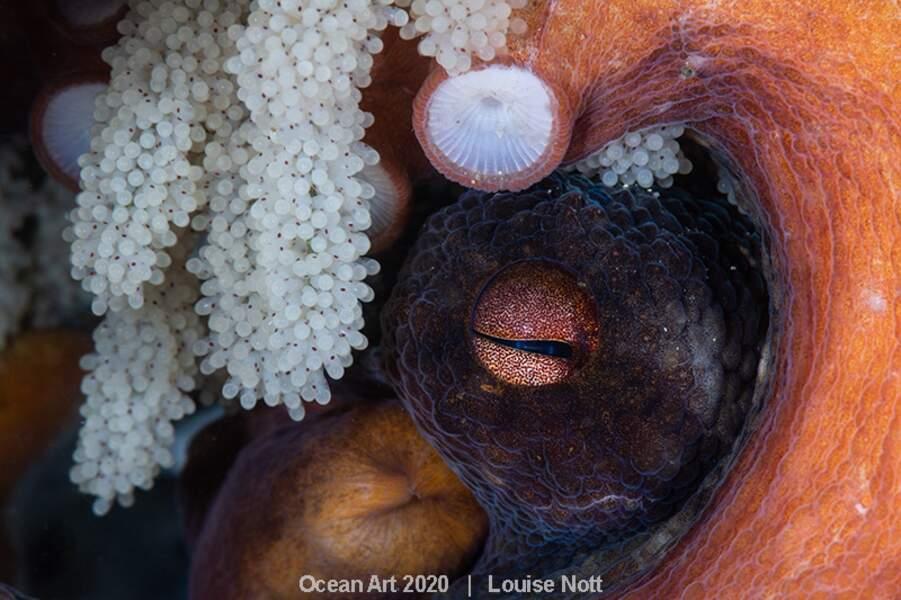 """A Mother's Watchful Eyes"", Louisse Nott : deuxième prix catégorie ""Marine Life Behavior"""