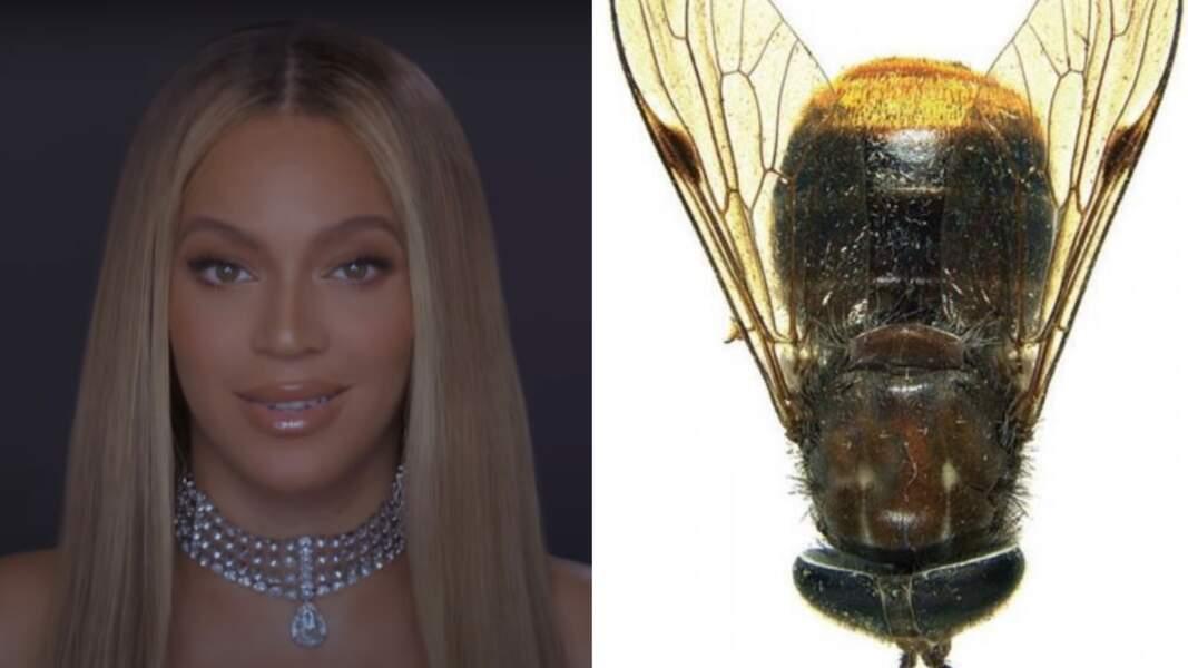 Beyoncé a donné son nom à une « mouche à cheval »