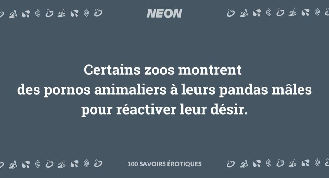 Certains zoos montrent des pornos animaliers à leurs pandas mâles pour réactiver leur désir.