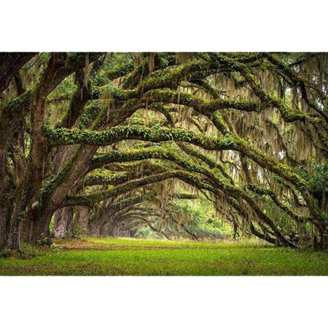 Quand-les-arbres-nous-inspirent