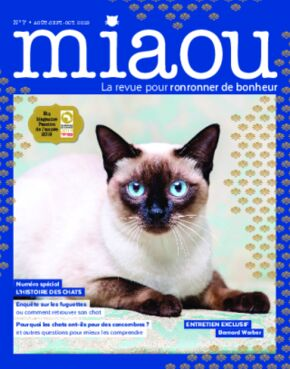 Miaou n°7