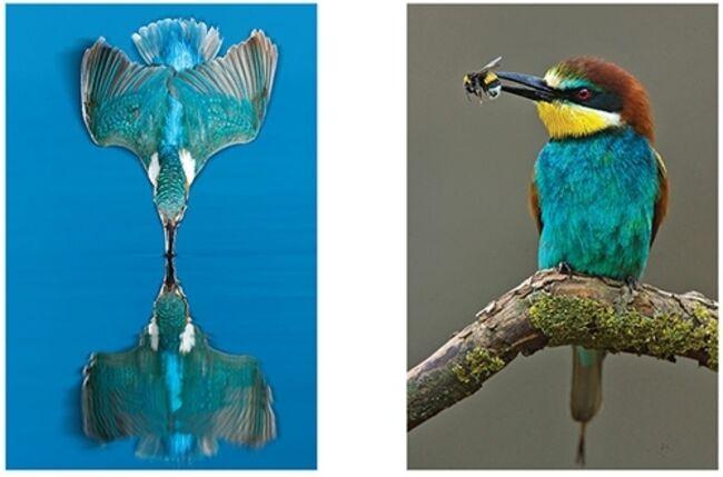 la-grande-et-belle-histoire-des-oiseaux