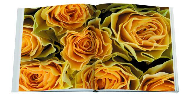 Livre Roses